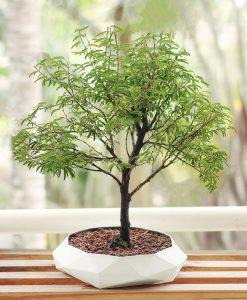 impressora 3d como ganhar dinheiro dudecor vaso bonsai geometrico